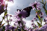 what-know-about-allergies-butterfly